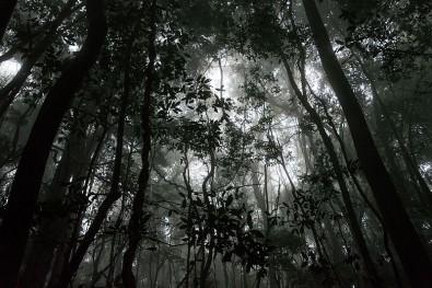 Un megaestudio señala los límites de supervivencia de los bosques tropicales