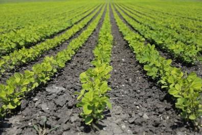 UFSCar seleciona alunos para mestrado em produção vegetal e bioprocessos associados