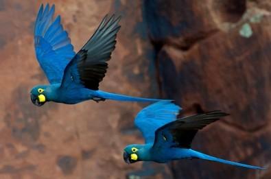 Doutorado direto na USP em conservação de aves na Caatinga