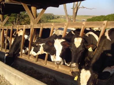 Apoiado pela FAPESP, Instituto de Zootecnia amplia oferta de soluções para produtores de carne e leite