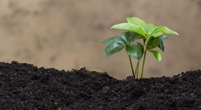 Unesp de Sorocaba oferece pós-graduação em ciências ambientais