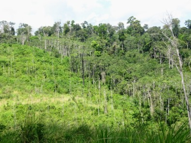 Regenerated forests offset 12% of carbon emissions due to deforestation in Brazilian Amazon in 33 years