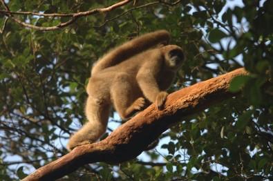 Estudos detalham impactos do declínio de populações de mamíferos na região neotropical