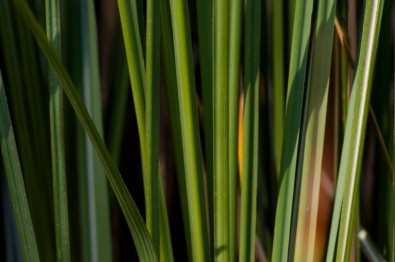 Study confirms contribution of bioenergy to climate change mitigation