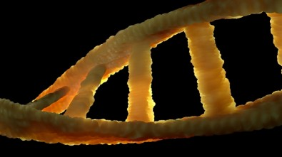 Brazilian researchers complete Latin America's largest whole-genome sequencing of elderly people