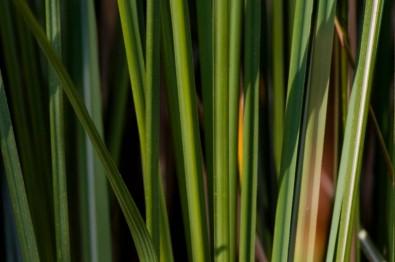 Un estudio confirma el aporte de la bioenergía a la mitigación de los cambios climáticos