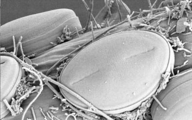 Consórcio internacional identifica mais de 12 mil novos grupos de microrganismos