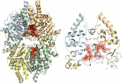 Pesquisa revela estrutura de proteína e permite busca de fármacos para elefantíase e leishmaniose cutânea