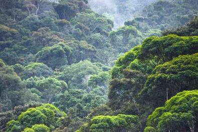 BIOTA-FAPESP comemora 20 anos subsidiando políticas públicas ambientais