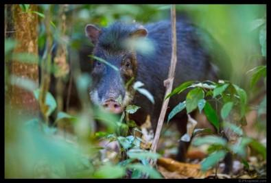 Grandes mamíferos tornam solo da floresta mais fértil