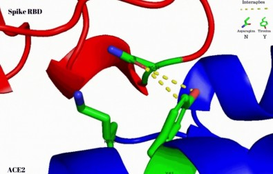 Estudo indica um dos fatores que tornam nova variante do coronavírus mais contagiosa