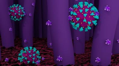Estrutura do novo coronavírus pode inspirar desenho de nanopartículas para uso terapêutico