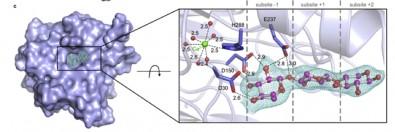 Descoberta abre caminho para o desenho racional de enzimas visando aplicações biotecnológicas