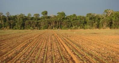 Desmatamento na Amazônia favorece aumento de bactérias resistentes a antibióticos no solo