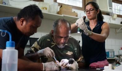 Un grupo internacional de científicos busca modelos para prever brotes de dengue, zika y fiebre amarilla