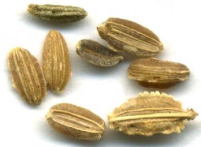 Una técnica basada en la inteligencia artificial permite automatizar el análisis de las semillas