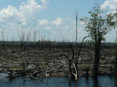 Incêndios florestais têm promovido a expansão das savanas no coração da Amazônia, indica estudo