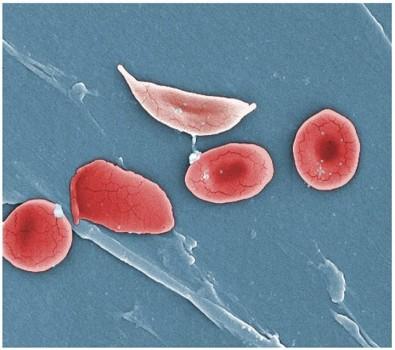 Treinamento técnico em biologia celular na Unicamp