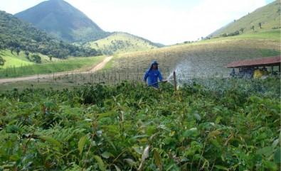 Estudo elenca dez regras de ouro para o reflorestamento