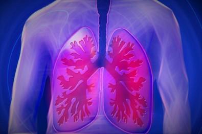 Un atlas pulmonar ayuda a entender los efectos del nuevo coronavirus en los alvéolos