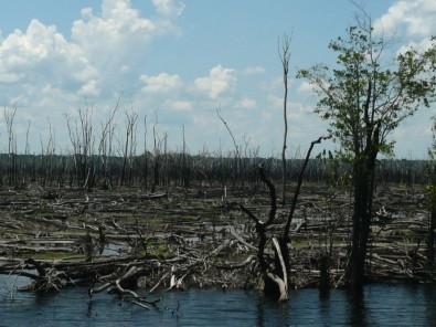 Los incendios forestales promueven la expansión de las sabanas en el interior de la Amazonia