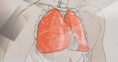 Pesquisa avalia efeito da poluição do ar na recuperação de lesões pulmonares
