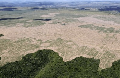 Increase in deforestation of the Amazon threatens Brazil's ability to achieve its climate goals