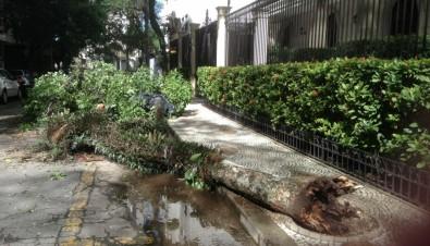 Queda de árvores durante a seca na cidade de São Paulo está ligada a manejo inadequado, sugere estudo