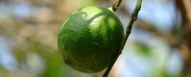 Nanopartículas aumentam o prazo de validade de frutos e flores