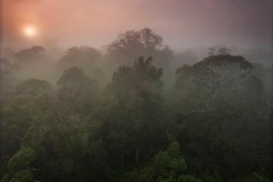 El aumento de CO2 puede tener un impacto aun mayor que el desmonte en la merma de lluvias amazónicas