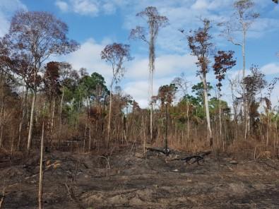 Seca e fogo amplificam morte de árvores e emissões de CO2  na Amazônia