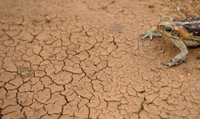 Droughts may increase in South America by the end of the century, study suggests