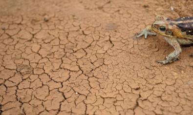 Pueden aumentar las sequías hacia el final de este siglo en América del Sur