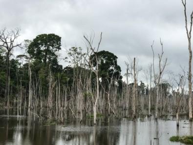 Reservatório de Belo Monte triplicou emissão local de gases de efeito estufa