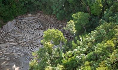 Soluções baseadas na natureza são essenciais para combater mudanças climáticas e a perda de biodiversidade