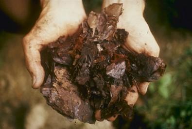 Estudo mostra o aproveitamento de resíduos orgânicos na América Latina e Caribe