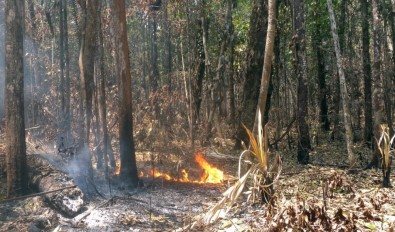 Fire in wet area of the Amazon destroys 27% of trees in up to three years, study finds
