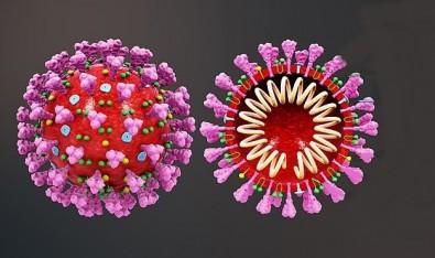 Técnica usada na Unifesp permite sequenciar o genoma do novo coronavírus com resolução 25 vezes maior