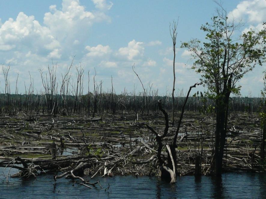 Amazônia queimada