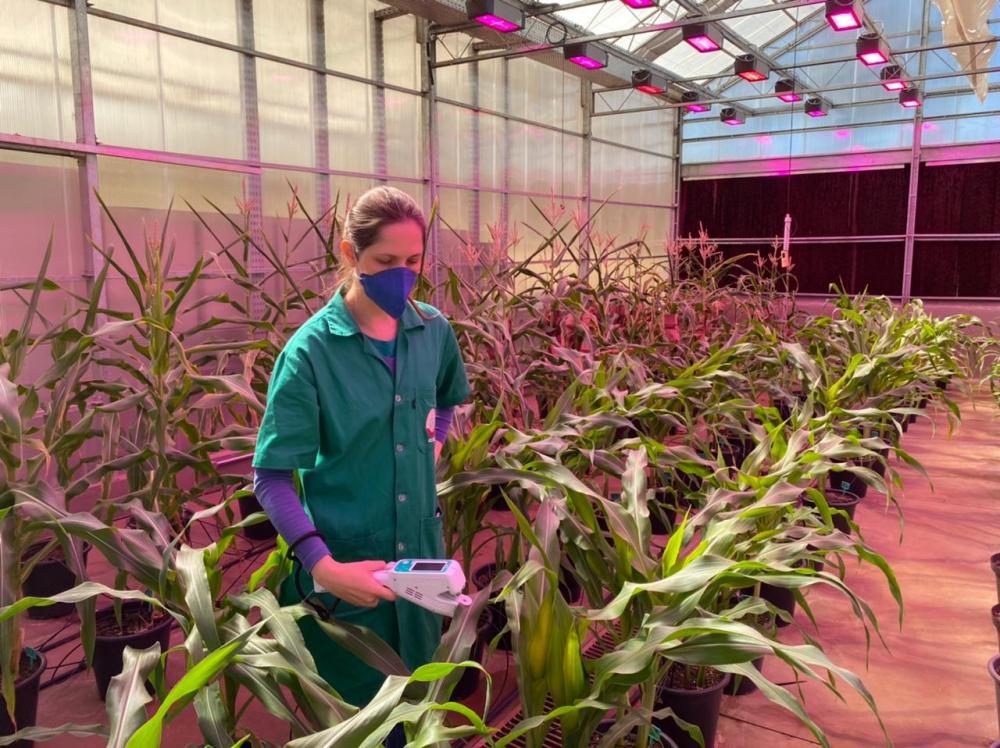 Artigo mapeia tendências no desenvolvimento de plantas transgênicas ou geneticamente editadas