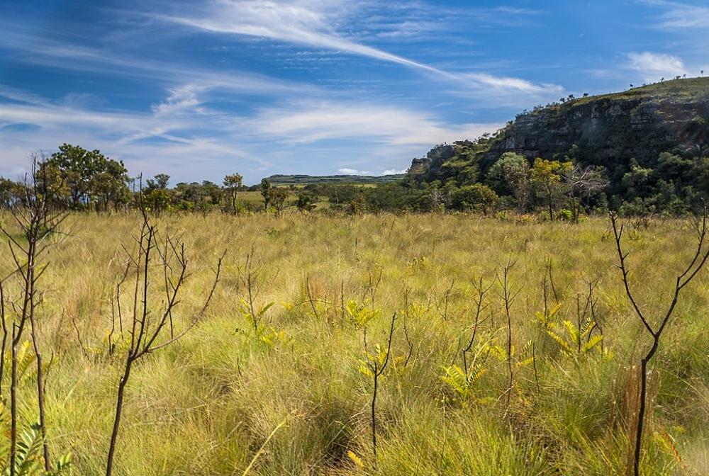 Estudo aponta diretrizes para barrar a degradação acelerada de campos e savanas