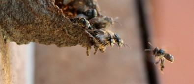 Bactérias e fungos desempenham papéis-chave nas colônias de insetos sociais