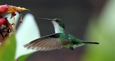 Ecossistemas poderão ser restaurados por meio da engenharia da biodiversidade
