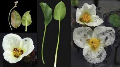A importância das pequenas plantas do Cerrado