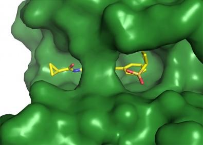 Sonda química permite regular via de sinalização essencial nas células