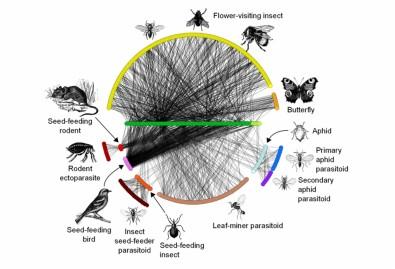 Sequenciamento de DNA permite gerir e recuperar ecossistemas