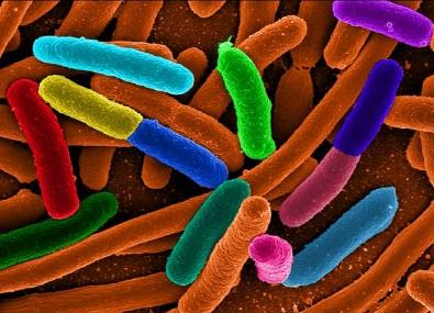 Pós-doutorado em Genética Molecular de Microrganismos com Bolsa da FAPESP