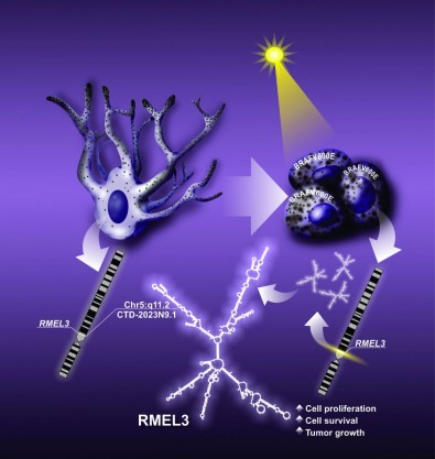 Estudo identifica novas funções de molécula envolvida no melanoma