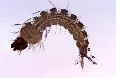 Ministério da Saúde e Fundação Bill & Melinda Gates lançam chamada para pesquisas sobre malária