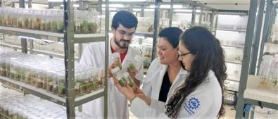 Estudo busca potencializar ação contra tumores de composto extraído de planta amazônica